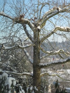 A view off Dabby's porch to the winter wonderland...