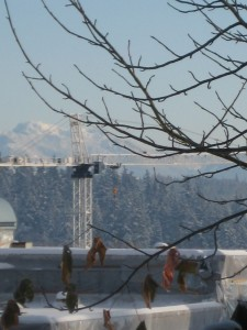 A view of the distant Cascade mountains and a tower crane.